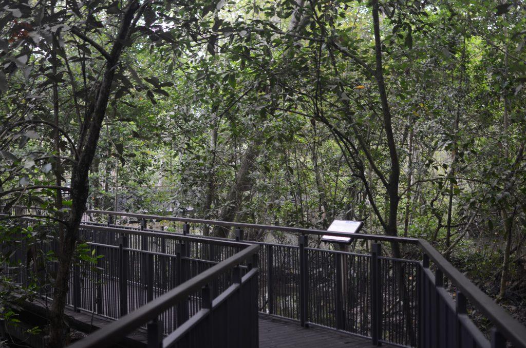 Boardwalk through Sungei Buloh Wildlife Preserve