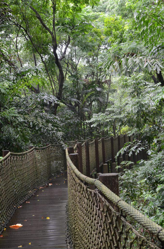 An elevated rope boardwalk in Sungei Buloh Wildlife Preserve, Singapore